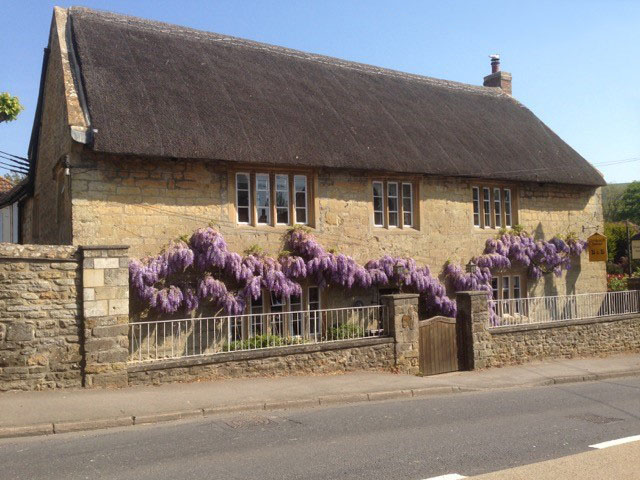 Chideock-House-Main Street-Wisteria display-Bed-Breakfast-west-dorset-country
