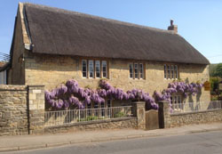 Chideock House Main Street Wisteria Display